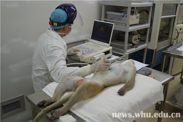 临床研究,动物模型