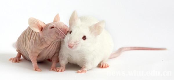 建立动物模型